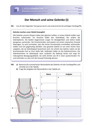 Vorschaugrafik 1 für das  Arbeitsblatt Der Mensch und seine Gelenke  von Lehrermaterial.de.