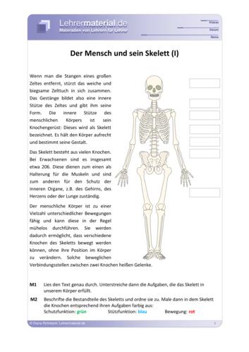 Detailseite für das  Arbeitsblatt Der Mensch und sein Skelett öffnen