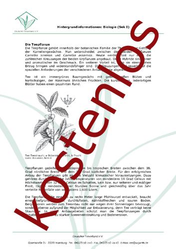 Vorschaugrafik für das kostenlose Arbeitsblatt Die Teepflanze (Sek. I) von Lehrermaterial.de
