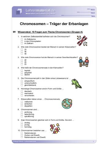 Vorschaugrafik 1 für das  Arbeitsblatt Chromosomen - Träger der Erbanlagen von Lehrermaterial.de.